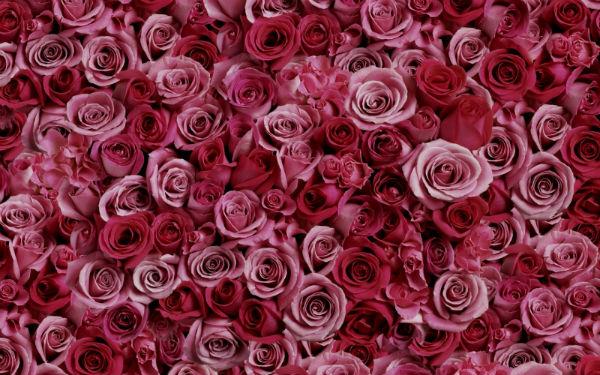 Розы - символ 10 годовщины свадьбы.