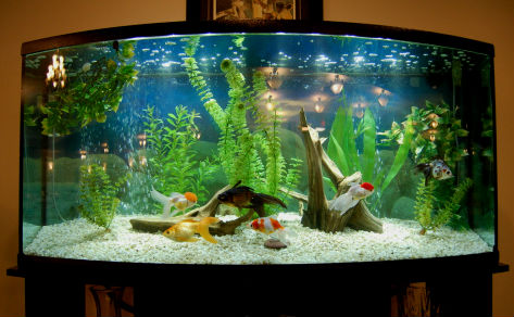 Аквариум с рыбками - это так символично.