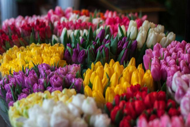Все самое интересное о Международном Женском Дне - 8 марта (история, факты, традиции, подарки, открытки)