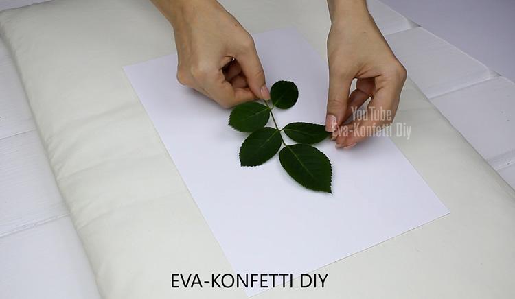Как быстро засушить листья для гербария или поделок (лучший способ мгновенной сушки растений)